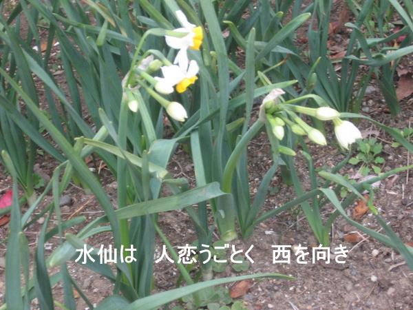 1-20130212daffo 007.jpg