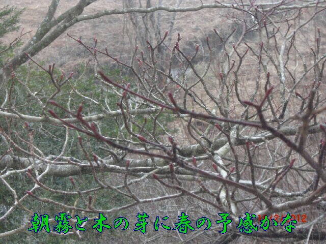 20120215-ichiyu006as.jpg